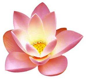 yoga-flower
